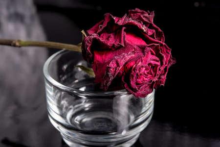 red rose bokeh: Love
