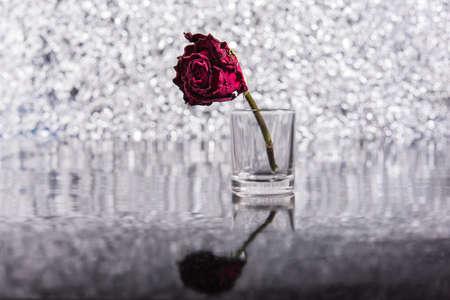 red rose bokeh: Dead Rose Stock Photo