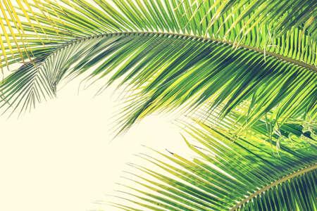 Palmsonntag-Hintergrund mit grünen tropischen Baumblättern gegen natürlichen Sommer- oder Frühlingshimmel