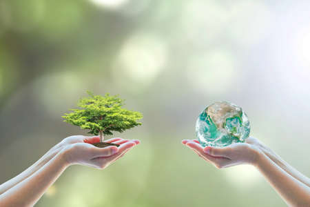 Two people human hands holding/ saving growing big tree on soil eco bio globe in clean CSR ESG natural sunlight background