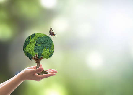Green globe tree on volunteers hand for sustainable environment and natural conservation  in CSR concept