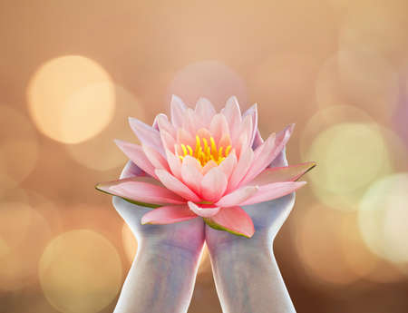 Buddha's birthday worshiping concept with woman's hands holding water Lilly or lotus flower Stock Photo