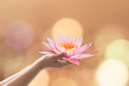 Buddha's birthday worshiping concept with woman's hands holding water lilly or lotus flower Stockfoto