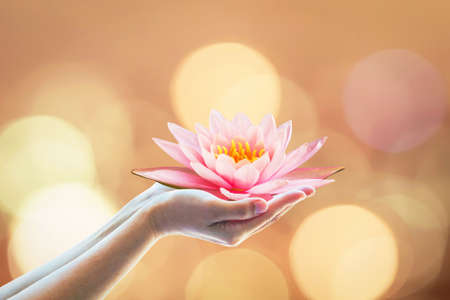 Vesak day, Buddhist lent day, Buddha's birthday worshiping concept with woman's hands holding water Lilly or lotus flower Stockfoto