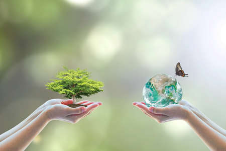 Two human hand planting perfect growing tree earth on natural background greenery Arbor reforestation conservation csr esg peace campaign World environment day Standard-Bild