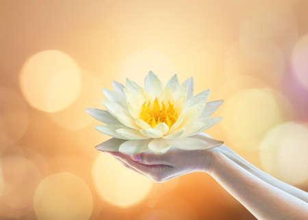 Jour du Vesak, jour du carême bouddhiste, anniversaire de Bouddha, culte religieux du bouddhisme Purnima et concept d'esprit humain mondial avec la main de la femme tenant la fleur de nénuphar de lotus priant et sacrifiant Banque d'images