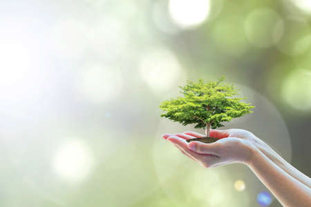 Saving world natural environment and sustainable ecosystem with tree planting on volunteer's hand, education concept