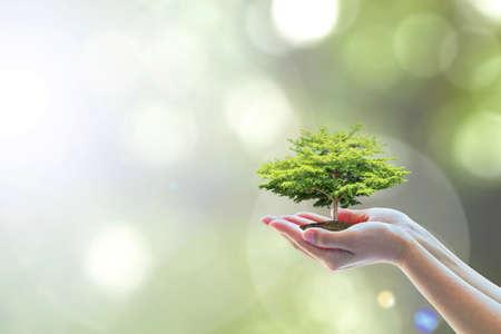 Salvare l'ambiente naturale del mondo e l'ecosistema sostenibile con la piantumazione di alberi sulla mano del volontario, concetto educativo