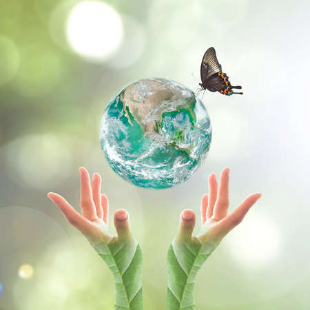 World environment day and ecological friendly concept with green planet on hands with tree leaves: