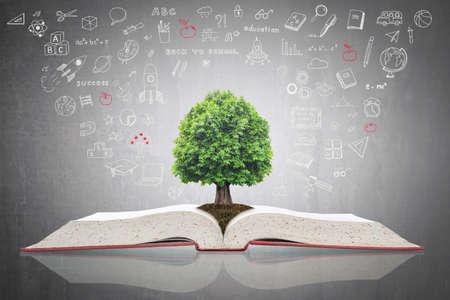 Albero della conoscenza che cresce su un libro di testo aperto con scarabocchi per investimenti educativi e concetto di successo Archivio Fotografico
