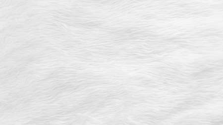 Fur background with white soft fluffy furry texture hair cloth of sheepskin for blanket and carpet interior decoration Stok Fotoğraf