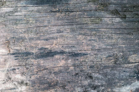 Rustic wood texture background dark old color