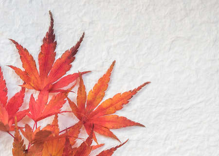 Dried red japanese maple tree leaf decoration on corner edge frame of mulberry paper