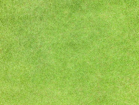 Natural grass texture pattern background golf course turf from top view with authentic grassy lawn for environmental backdrop in yellow green