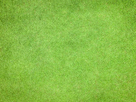 Natural grass texture pattern background golf course turf lawn from top view in bright yellow green Archivio Fotografico - 129409822