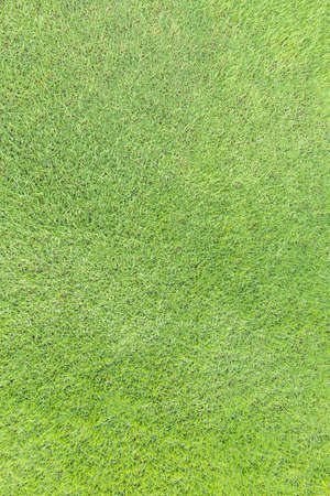 Natural grass texture pattern background golf course turf lawn from top view in bright yellow green color Archivio Fotografico - 129409826