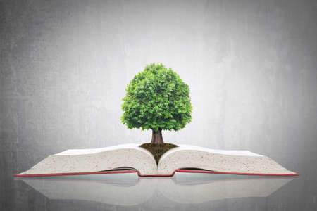 Tree of knowledge growing on open textbook for educational investment and success concept