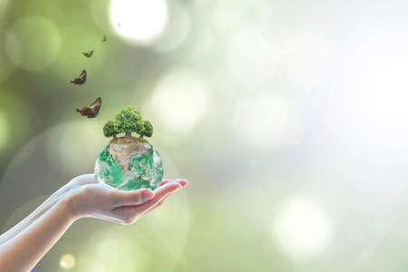 Groene bol en prieelboom planten op de hand van vrijwilligers voor het redden van milieu, natuurbehoud en mvo-concept