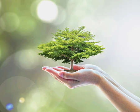 Sustainable environment, saving environmental ecosystem of forest, and go green concept with tree planting on volunteer's hands