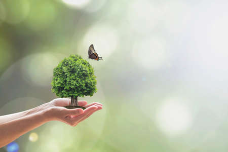 Environment and ecosystem preservation concept with tree planting on volunteer's hand Reklamní fotografie