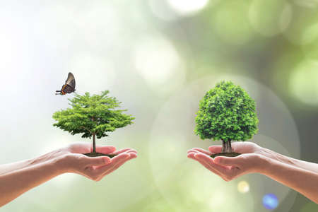 Environmental biodiversity in ecosystem concept with bio diversity in species of tree planting and saving biological life living in clean environment on volunteers hands Standard-Bild