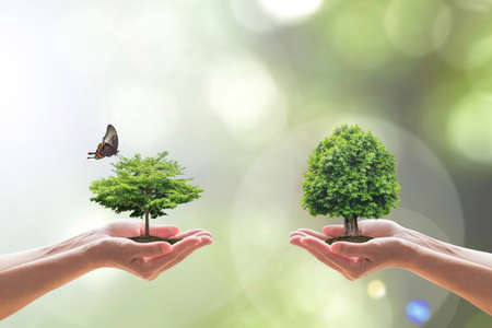 Environmental biodiversity in ecosystem concept with bio diversity in species of tree planting and saving biological life living in clean environment on volunteers hands 写真素材