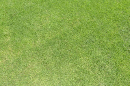Green grass lawn texture background from top view for golf course turf with grassy pattern for environmental backdrop Reklamní fotografie