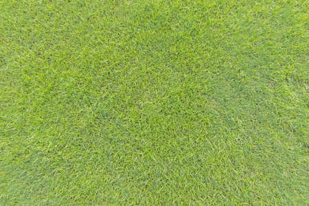 Green grass lawn texture background from top view for golf course turf with grassy pattern for environmental backdrop