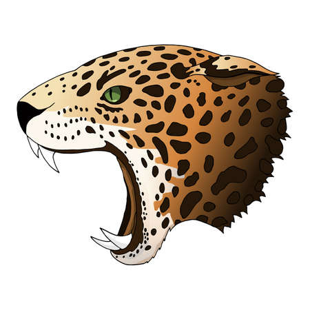 Vector angry leopard portrait. Jaguar predator head colorful isolated