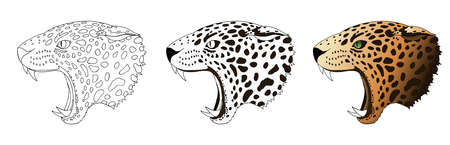 Vector angry leopard portrait. Jaguar predator head colored and doodle isolated