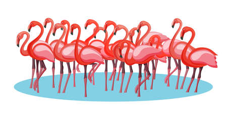 Exotic pink purple flamingo birds crowd group gathering flamboyance Illustration