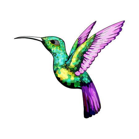 Mały koliber. Ptak jakobin rufy i białoszyi. Egzotyczny tropikalny element zwierzęcy colibri, ikona lub etykieta. Złote i szmaragdowe pióra. Użyj na wesele, imprezę. Grawerowane ręcznie rysowane jako stary szkic.