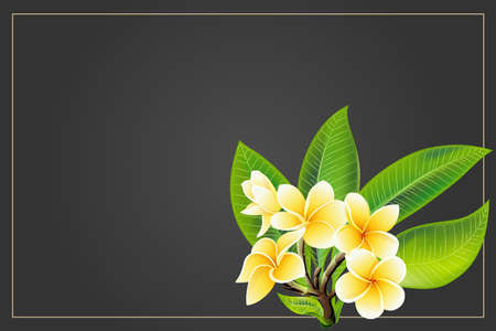 Golden frangipani or plumeria flowers with leaves. Save the date, sympathy, condolences or strict style postcard template. Vector Illustration Decorative burial funeral bouquet on dark Background Vettoriali