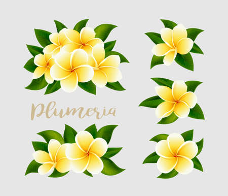 Realistic white yellow plumeria frangipani flowers with green leaves isolated on white background. Vector illustration. Design Elements for invitation to party, wedding or holiday Illustration
