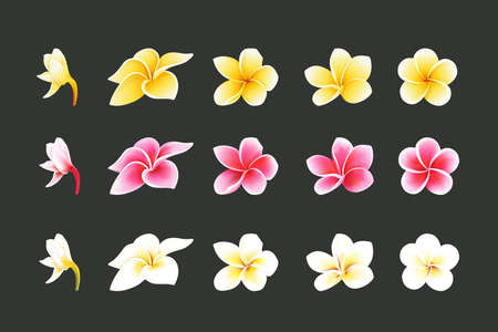 White, Pink and yellow Plumeria Flowers set in realistic style elements set Vector Illustration