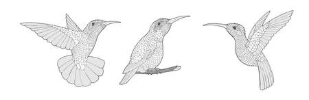 Coloring page with Hummingbird exotic birds, illustartion set