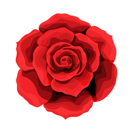 Disegno a mano rosa e colorato. Un bocciolo di rosa in fiore. Illustrazione vettoriale.