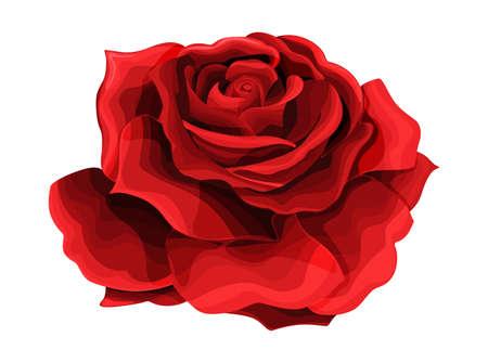 Dessin à la main rose et coloré en rouge avec des ombres. Un bouton de rose en fleur. Illustration d'un seul élément de vecteur isolé sur blanc pour la conception Vecteurs