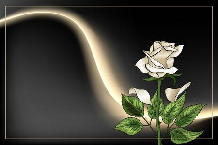 Single White Rose flower and frame on black background postcard template Illusztráció