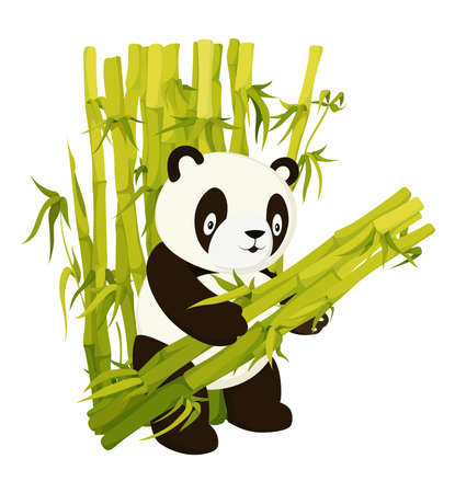 Cute panda bear gathering bamboo stems flat vector isolated illustration Çizim