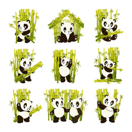 Set of cute panda bear gathering bamboo stems flat vector isolated illustration