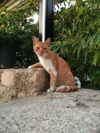 Minnie cat Stock Photo