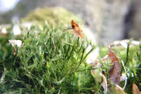 green shrubs sprouting on forest ground Standard-Bild