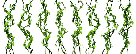 Green jungle vines isolated render on white background