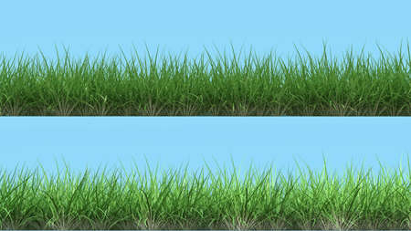 3d design element: two different lines of grass frontal render isolated on light blue high quality 3d design element