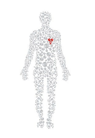 human evolution: Human body concept with red heart. Editable vector format. Illustration