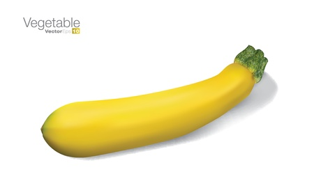 courgette: Fresh vegetable marrow in editable vector format. Illustration