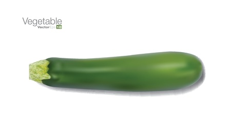 marrow: Fresh vegetable marrow in editable vector format. Illustration