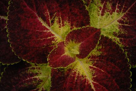 natures: Natures wonders Stock Photo