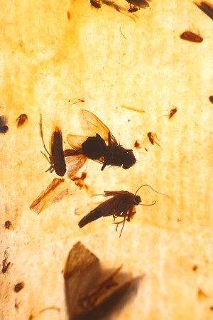 insectiside: flypaper